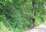In bicletta lungo i sentieri della brughiera