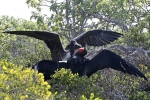 Galapagos08